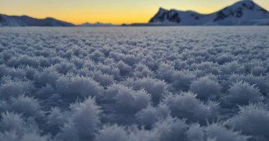 Qué son las flores que crecen en la Antártida